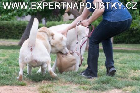 Úrazové pojištění dospělých - Paní pokousal pes při hře jarmila mlýnková reference úraz